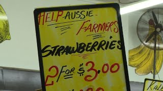 Australia moves to revive confidence in strawberries