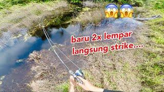 Casting ikan  Gabus, 2X Lempar langsung di sambar