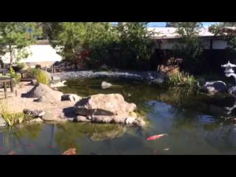 Yume Japanese Gardens in Tucson - YouTube