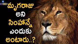 మృగరాజు అని సింహాన్నే ఎందుకు అంటారు..? | The Importance of Lion in Our Ecosystem..! | Eyecon Facts