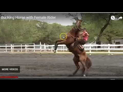 Horse Trying To Release From Pressure Will Be Labeled Bad Horse - Seeing The Truth In Horses