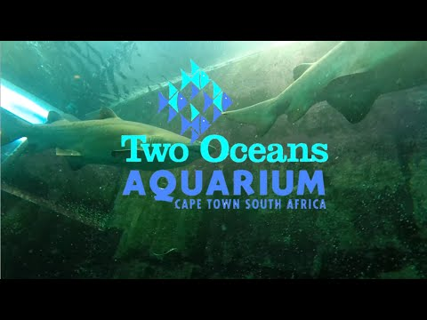 Shark scuba dive Two Oceans Aquarium