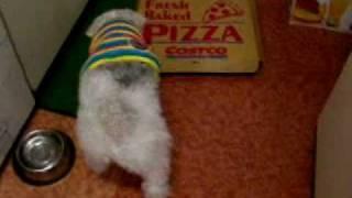 コストコのピザの箱についているチーズを食べようとしたらふたが閉まっ...