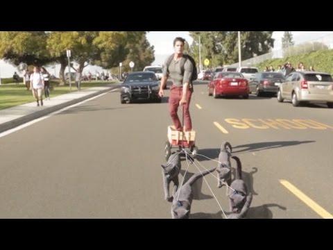 Aaron's Animals - Cat Sledding
