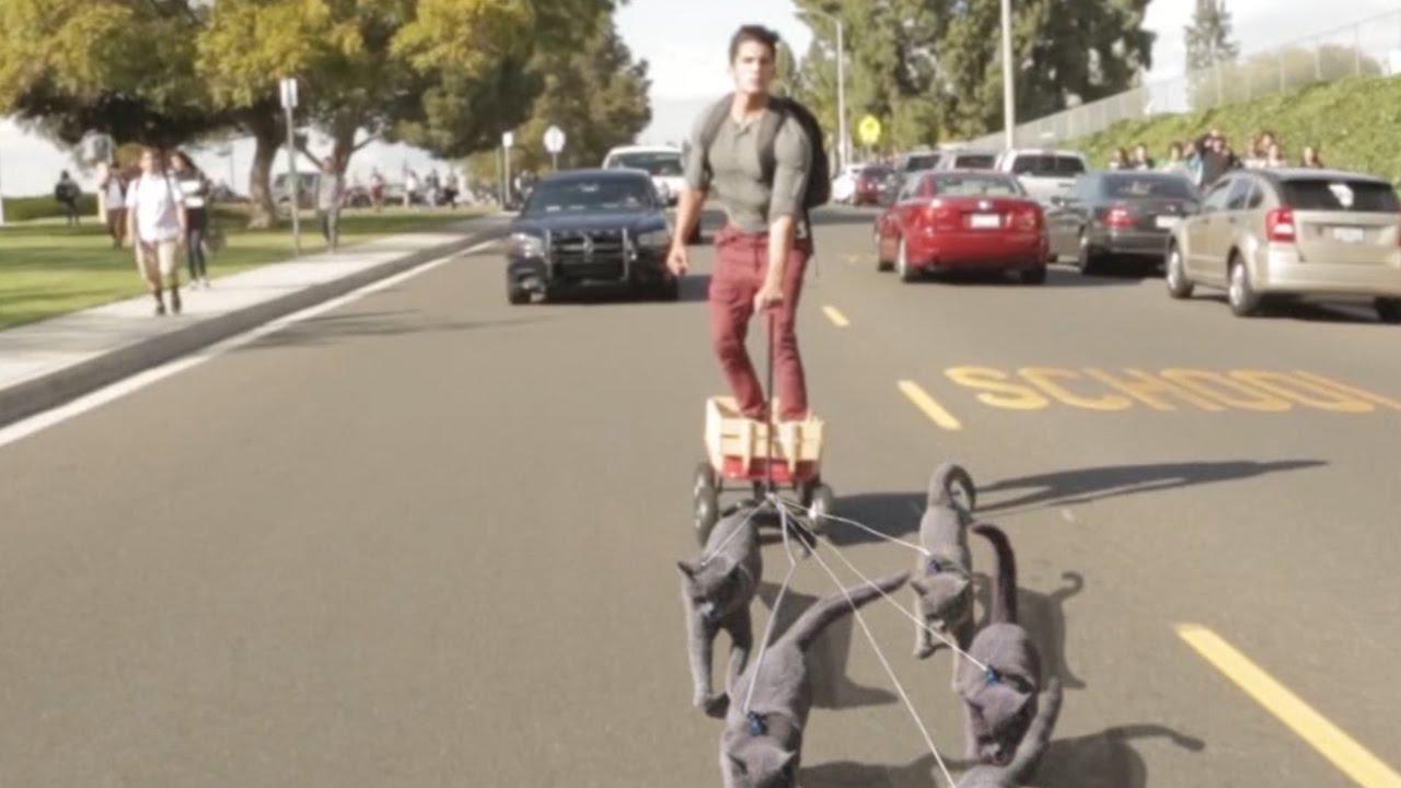 Cat Pulling Wagon : Aaron s animals cat sledding youtube