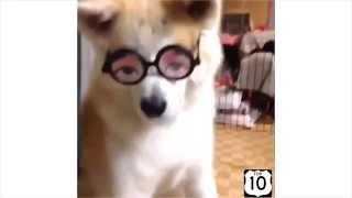 Смешные животные! Топ 10 смешных собак  Юмор, смешное видео, ржака =