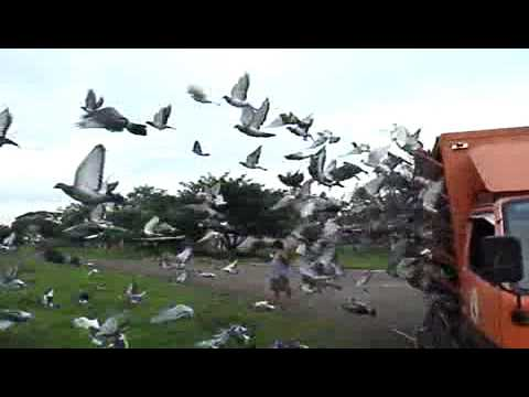 United Caloocan Pigeon Club in San Miguel Bulacan