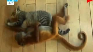 Видеоролики о любви животных взорвали Интернет