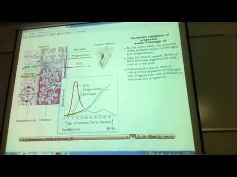 Jonathan Christie 233 LECTURE week 9 Part #1 Pregnancy Birth Lactation Medical Genetics