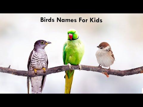 Birds Names for Kids | Birds Video for Kids  | Different Types of Birds | Learn About Birds