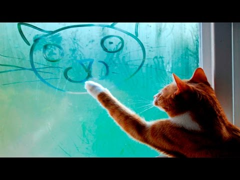 Funny Cats Compilation December 2015 – Funny Cat Videos 2015