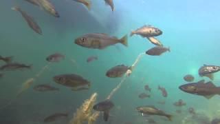 Norwegen  - Unterwasser Spaziergang