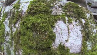 Буки, Черкасская область(Video: Gopro Hero 3 Music: Synkro - In My Arms (ft. Robert Manos), 2014-11-04T00:24:46.000Z)