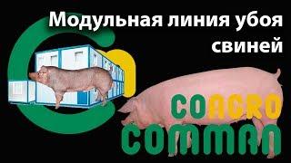 Модульная линия убоя свиней, КОММАН