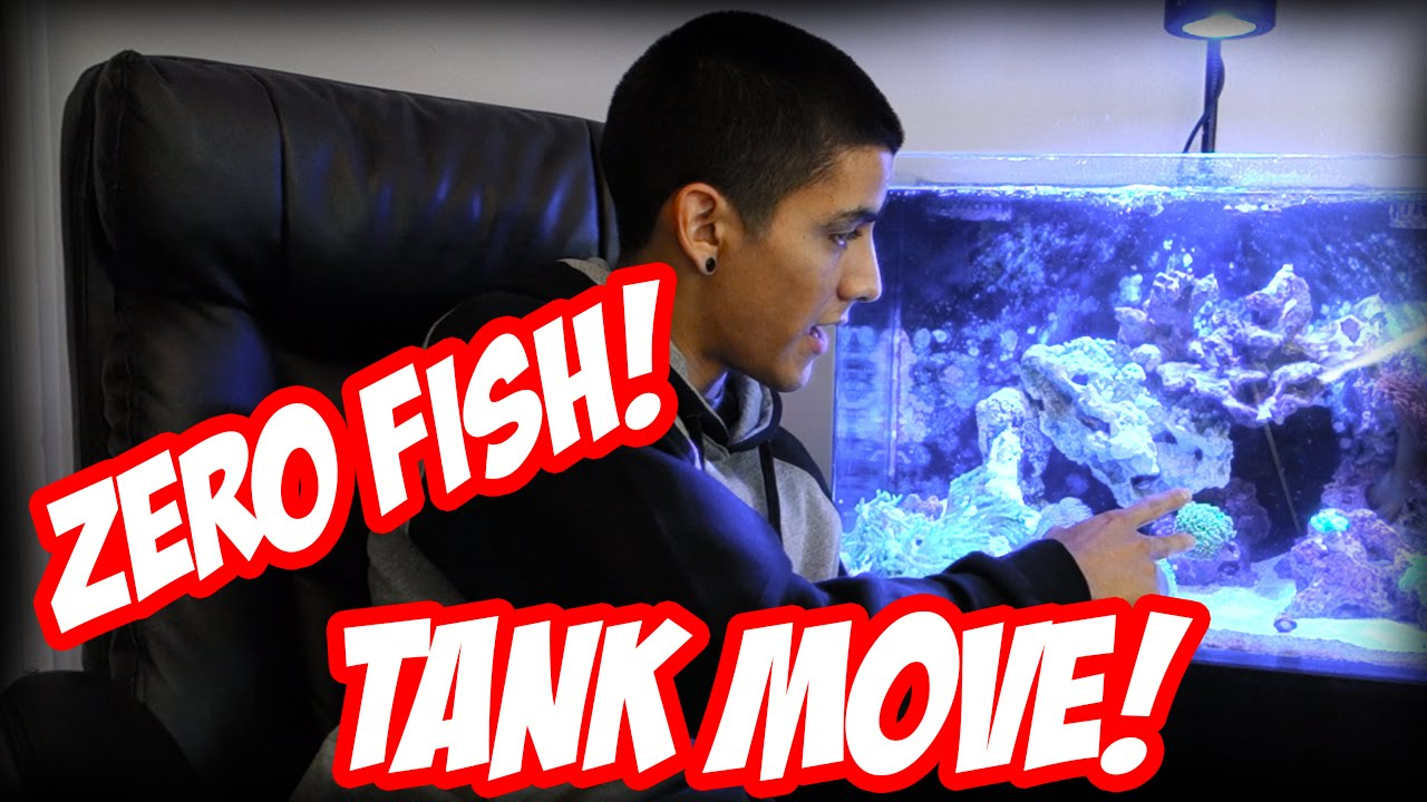Fish in tank disappeared - Fish Disappeared Tank Move Future Tank Modifications