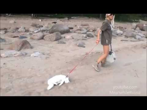 Download Cat Protest To Walk On The Beach
