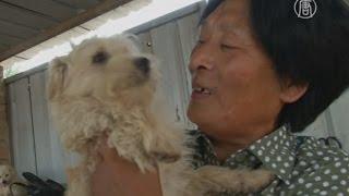 Китаянка спасает собак, которых собирались съесть (новости)