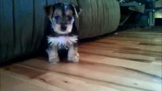 Puppy Cam!!