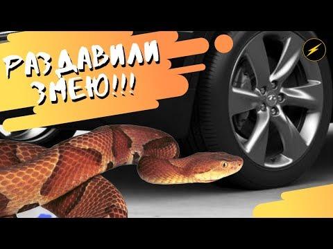 Раздавили змею на машине. Давим различные предметы на машине