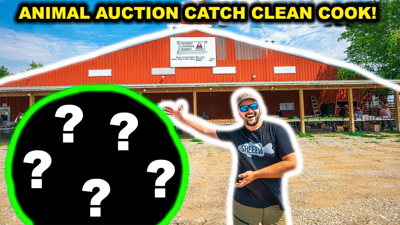 ANIMAL AUCTION Catch Clean Cook CHALLENGE!!!