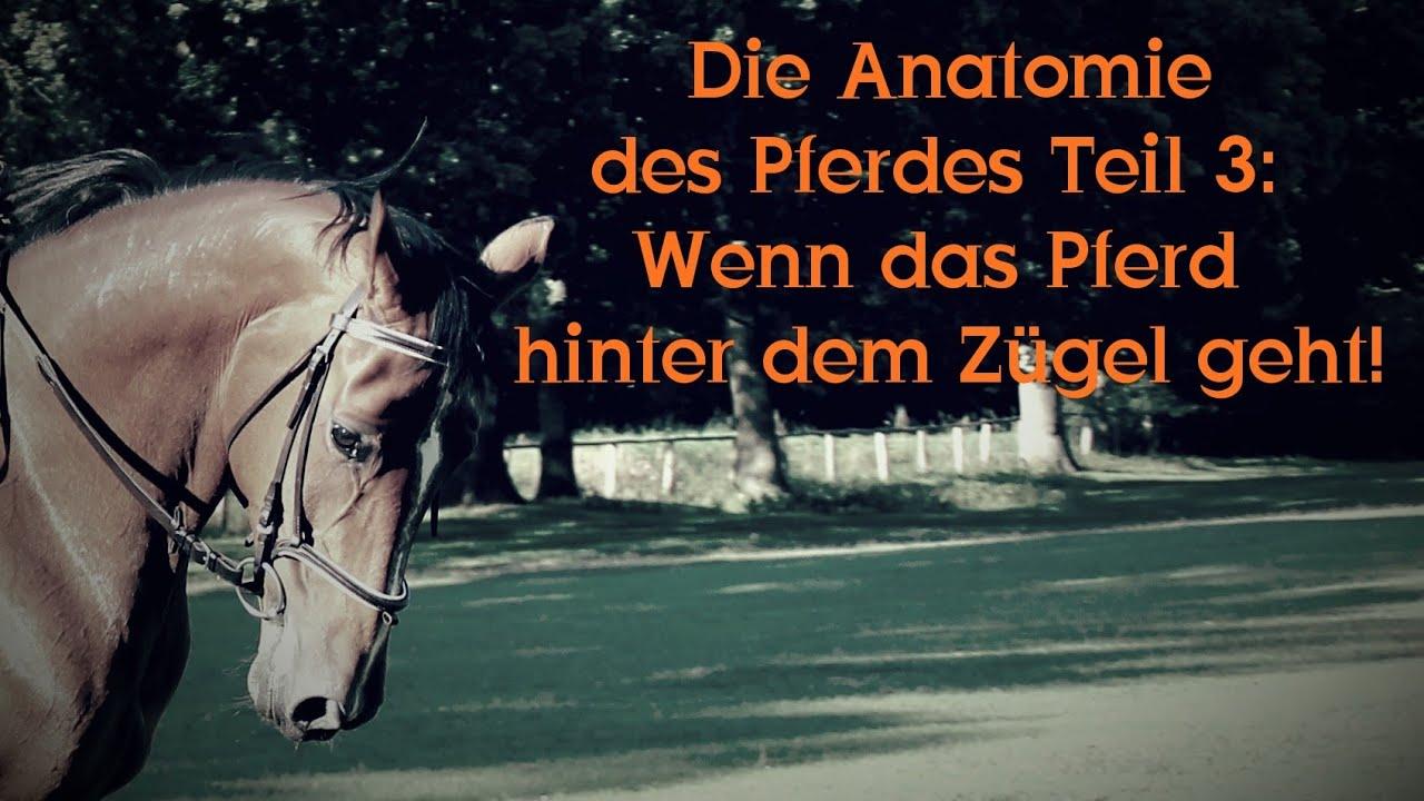 Die Anatomie des Pferdes, Teil 3: Wenn das Pferd hinter dem Zügel ...