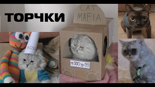 Тайная жизнь кота-блогера   коты - торчки   серия 5