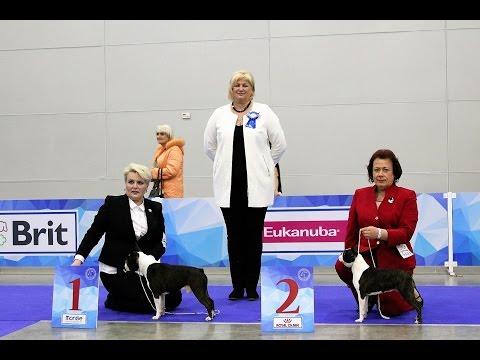 International Dog Show RKF President Cup 2017, Boston Terrier