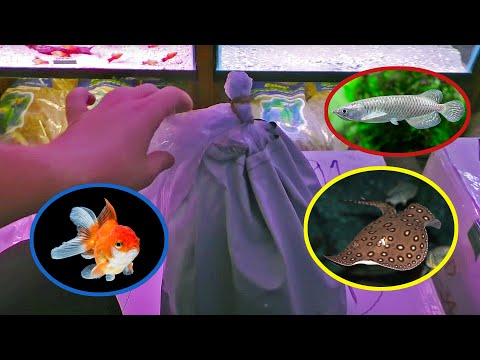 NEW AQUARIUM FISH UNBOXING