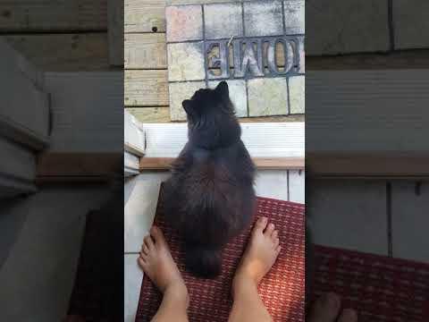 Black cat documentary