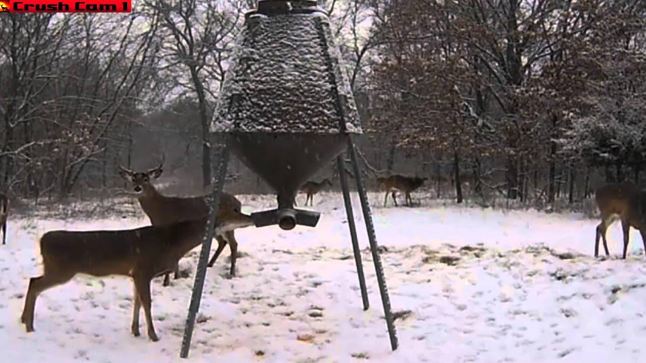 sale on feeders treatsandtravels gravity com deer time for buck boss buckeye feeder x