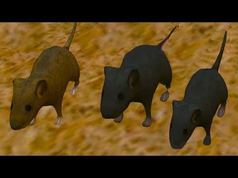 СИМУЛЯТОР Маленькой МЫШИ #6 виртуальный питомец в развлекательном видео для детей #ПУРУМЧАТА