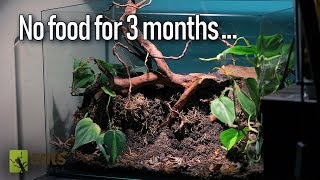 My pet trap-jaw ants (Odontomachus sp.) called the Jawbreakers, have managed to survive three months in their specially designed terrarium, called the ...