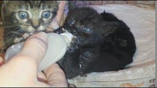 Котята ПОДРАЛИСЬ ЗА БУТЫЛОЧКУ С МОЛОКОМ Приколы С Котами Смешные Коты