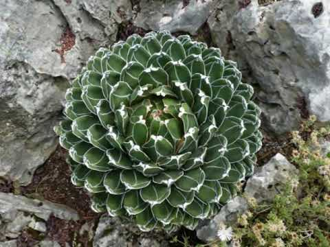 jardin exotique de monaco cactus 1 2 youtube. Black Bedroom Furniture Sets. Home Design Ideas