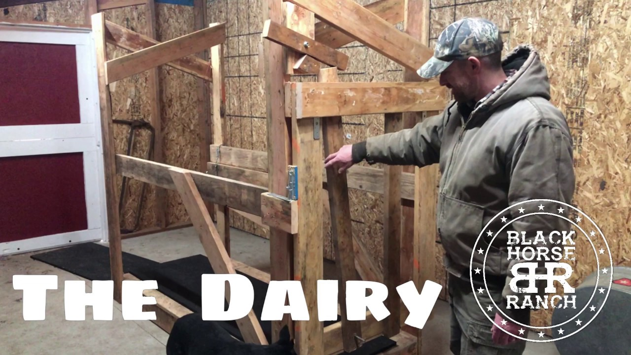 Milking Stanchion - Completing the Dairy Area