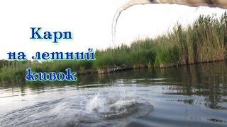 Ловля дикого карпа - сазана летом на боковой кивок***carp fishing(Рыбалка на боковой кивок. На протяжении многих лет моим любимым видом летней рыбалки остается ловля на..., 2015-07-14T19:41:51.000Z)