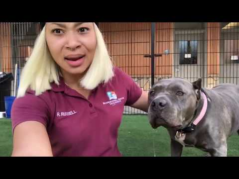 Work - Animal Shelter VLog Part 2