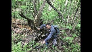 Находки под корнем 100-летнего дерева!) 2 часть