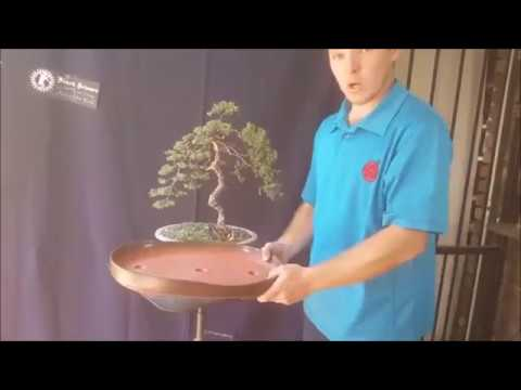 Antony Smith, Bonsai Demo (South Africa)