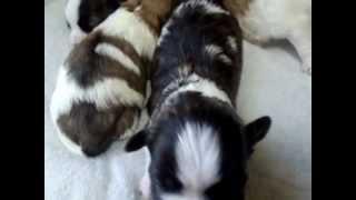 2012年12月31日に誕生した仔犬です。