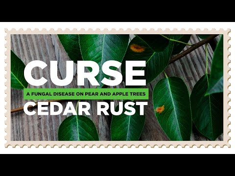 Apple Cedar Rust & Pear Rust: Turning Orange Spots To Monsters