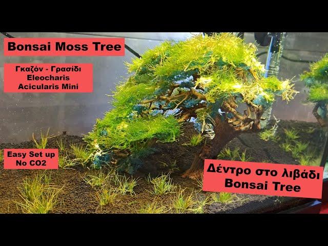 Aquarium Bonsai Tree *Project 4 μηνών* | Aqua planters ep 6