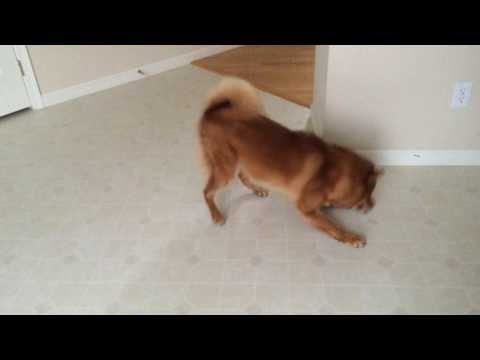 Hunter got a treat - dancing dog!