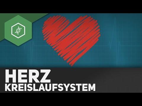 Das Herz Und Sein Kreislaufsystem ● Gehe Auf SIMPLECLUB.DE/GO & Werde #EinserSchüler