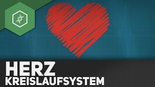 Das Herz und sein Kreislaufsystem