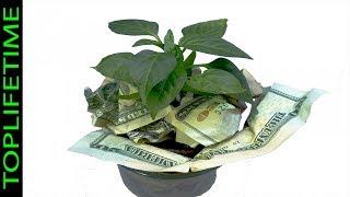 10 Plantas que atraen dinero al hogar