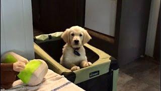 13 Puppies, 13 Crates And Quiet!