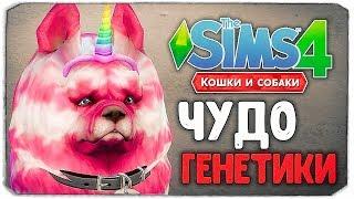 ЧУДО ГЕНЕТИКИ, КАКОЙ ПЕСИК САМЫЙ МИЛЫЙ? - The Sims 4 'Кошки и Собаки'