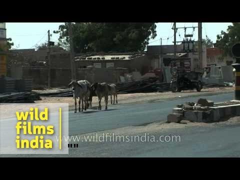 Road trip to Gujarat - India