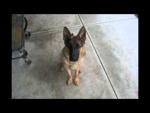 מגור לכלב גדול בארבעים שניות